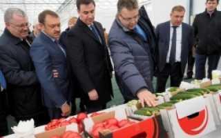 Какие культуры выращивают в ставропольском крае?