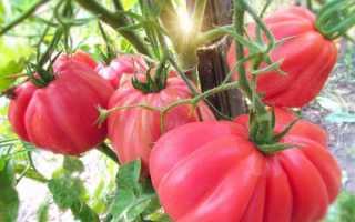 Лучшие сорта ребристых помидор