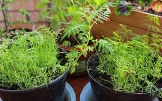 Какие растения можно выращивать в домашних условиях?