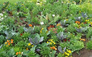 Какие овощи можно выращивать в теплице вместе с помидорами?