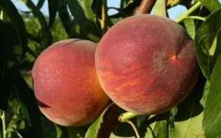 Хорошие сорта персиков