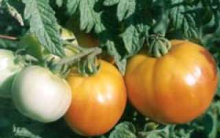 Можно ли выращивать рассаду томатов без пикировки?