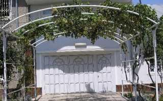 Можно ли выращивать виноград под навесом из поликарбоната?