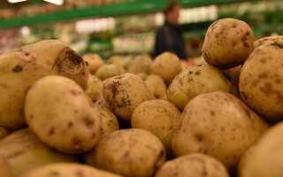 Белоруссия начала выращивать картофель на сахалине