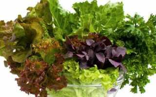 Какую зелень выгоднее выращивать на гидропонике?