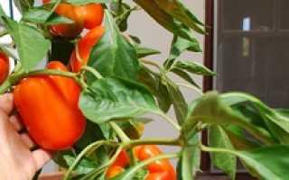 Выращиваем перец в домашних условиях