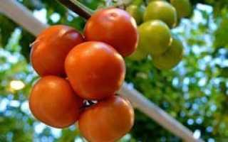 Как правильно выращивать томаты в теплице из поликарбоната?