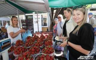 Где в калининградской области выращивают клубнику