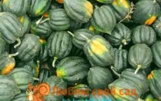 Самые хорошие сорта тыквы