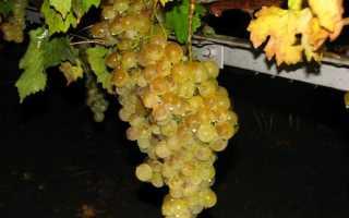 Лучшие крымские сорта винограда