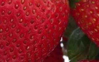 Как правильно выращивать клубнику на открытом грунте?
