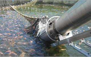 Какую морскую рыбу не выращивают искусственно список?