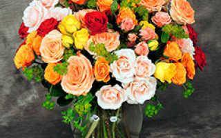 Роза спрей лучшие сорта