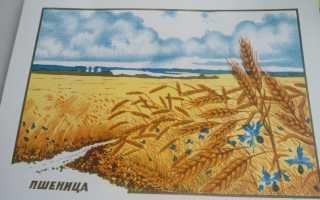 Занятие в подготовительной группе как выращивают хлеб
