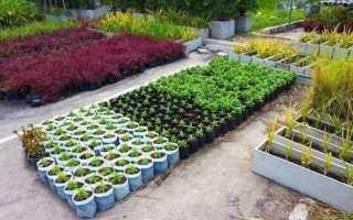 Джон джевонс как выращивать больше овощей читать