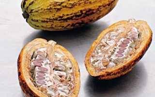 Как выращивать какао бобы в домашних условиях?