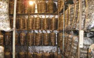 Как выращивать шампиньоны в подвале гаража в мешках?
