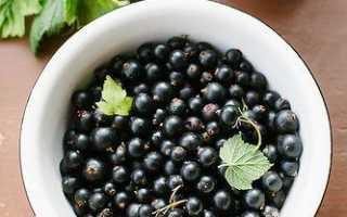 Хорошие сорта смородины черной