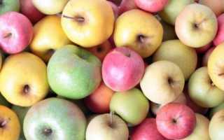 Лучшие европейские сорта яблонь