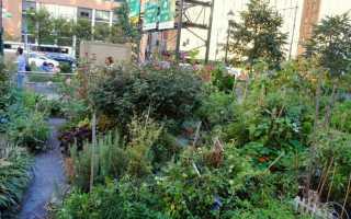 Можно ли в сша выращивать овощи на приусадебном участке?