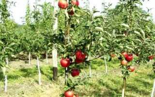 Какие плодовые культуры выращивают в московской области?
