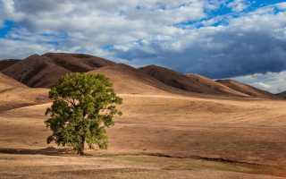 Культуры которые выращивают в оренбургской области