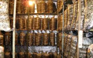 Как выращивать грибы в домашних условиях в погребе?