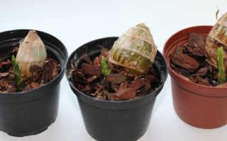 Как выращивать орхидеи из вьетнама в домашних условиях?