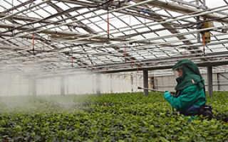 Какую ягоду можно выращивать в домашних условиях?