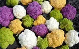 Как правильно выращивать цветную капусту в открытом грунте?