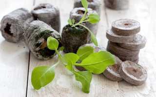 Можно ли выращивать капусту в торфяных таблетках?