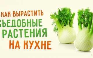 Какие съедобные растения можно выращивать в квартире?
