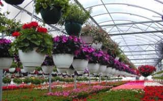 Какие культуры выгоднее всего выращивать в теплице?