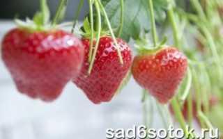 Как выращивать клубнику в теплице в домашних условиях?