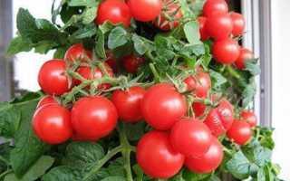Какие помидоры можно выращивать зимой на подоконнике?