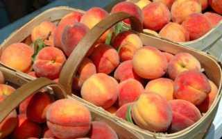 Лучшие сорта персиков в крыму