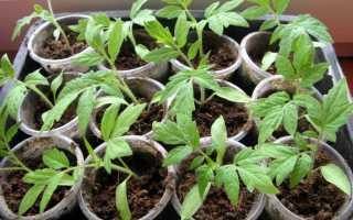 В чем выращивать рассаду в домашних условиях