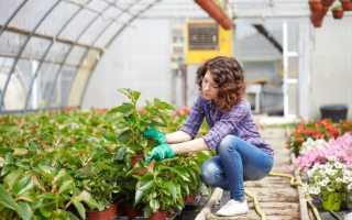 Что можно выращивать зимой в отапливаемой теплице?