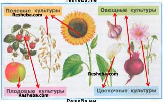 Примеры полевых культур выращиваемых в нашем крае