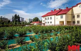 Какие сорта голубики лучше выращивать в беларуси?