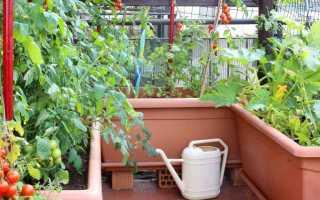 Что лучше выращивать в домашних условиях?