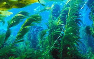 Как выращивать водоросли в аквариуме в домашних условиях?