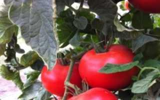 Как выращивать помидоры черри на подоконнике зимой?