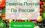 Что можно выращивать в одной теплице с помидорами?