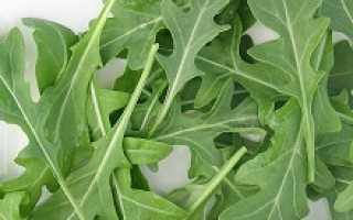Выращивать рукколу в домашних условиях